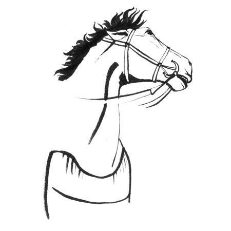 BW_Horse_PeterBeattySite