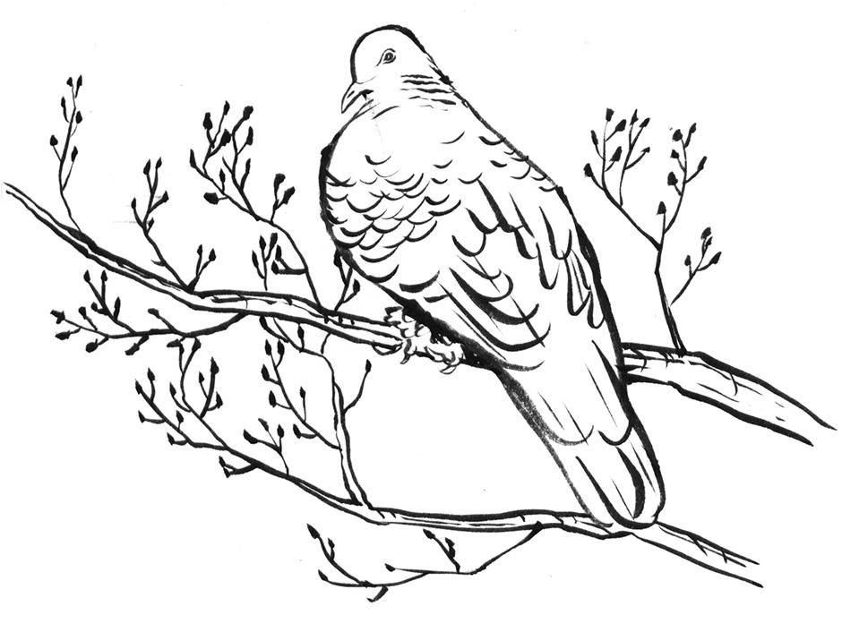 BW_Pigeon_PeterBeattySite